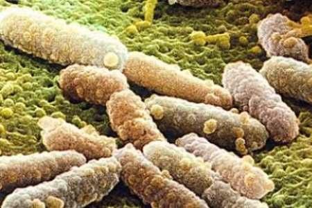 Грибы Кандида под микроскопом