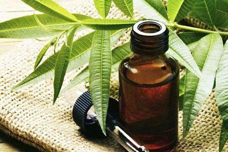 Масло чайного дерева от молочницы свойства способы применения рецепты