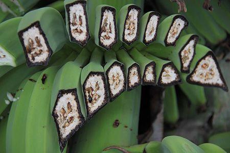 порченные бананы